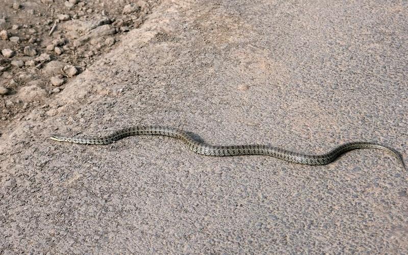 งูเลื้อย